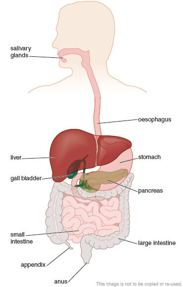 New gcse separate sciences ocr gateway sb page 30 figure 5 the main parts of the digestive system ccuart Images